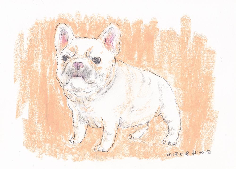 直筆 手描きオリジナル犬イラスト フレンチブルドッグ フレブルの絵 犬の