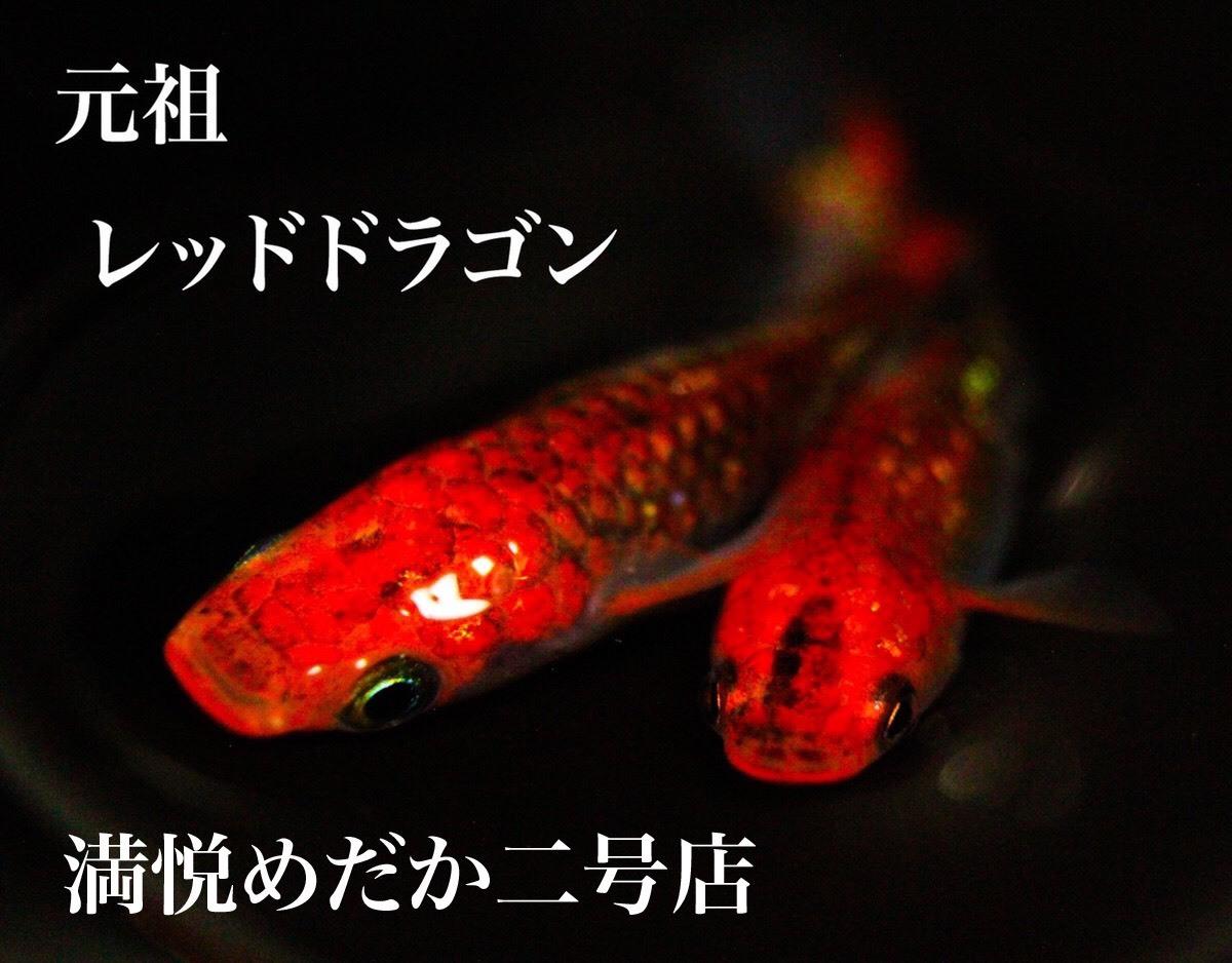卵 カビ メダカ ミナミヌマエビがメダカの卵に発生(付着)した「水カビ」だけを食べてくれる生き物だった!?